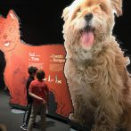 Storykiosk in 'Dogs: A Science Tail' exhibit